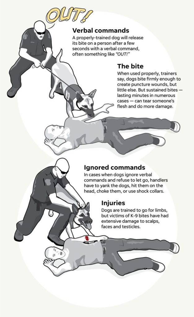 Graphic illustrates how a K-9 bites a person and what can happen if the dog ignores its handler and refuses to let go.